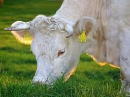 GFO LIFE кормовая добавка для Коровы, телята, КРС