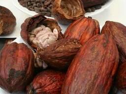 Какао порошок 10-12% - фото 2