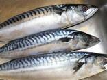 Дальневосточная замороженная рыба - фото 8