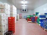 Холодильные склады - фото 4