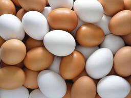 Куриные яйца - фото 2
