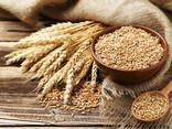 Пшеница - photo 1