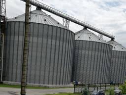 Пшеница 3,4 класс урожай 2020 года