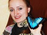 Живые бабочки - продажа готового бизнеса, франшиза. - photo 2